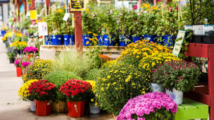 vivai pengo servizi di giardinaggio saonara padova On vendita piante giardino
